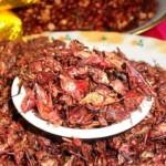 """sauterelles ou """"chapulines"""", une spécialité gastronomique du Mexique"""