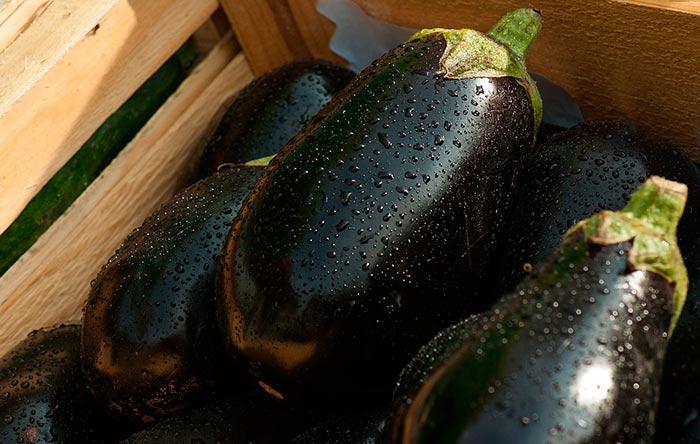 recette de salade aux aubergines (froide ou chaude) : une recette de cuisine facile