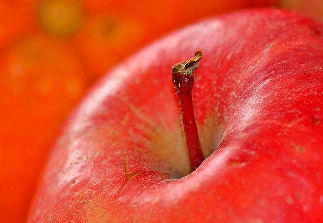 compote de pommes recette